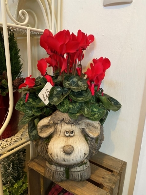 Christmas Sheep Planter