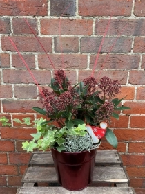 Red Festive Christmas Planter